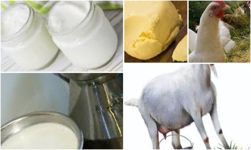 İlk An ki Kadar Taze Günlük Süt