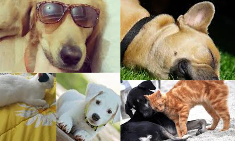 Köpek Sahiplenmek İsteyenlerin Bilmesi Gerekenler