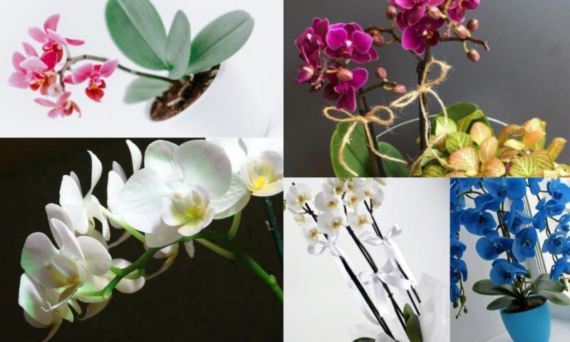 Zarif Orkide Tasarımları